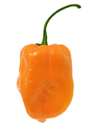 Habanero - chili peppers
